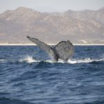 Cabo-Pulmo-whale-watching.jpg